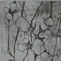 Cellen 2